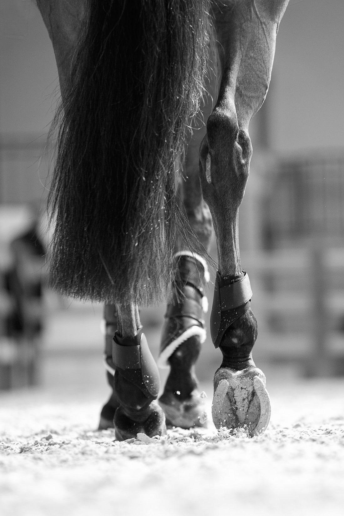 pieds cheval saut hermes - Longines Masters de Paris - Ambassadeurs on top !