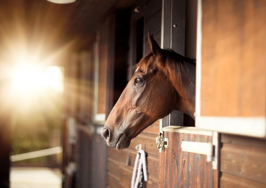 AA copie - Deux guides pratiques pour vendre et acheter votre propriété équestre avec Horse Immo.